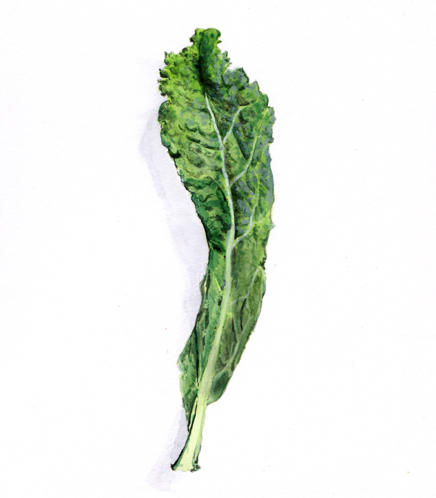 pen and palate kale web illustration